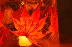 真冬の紅葉