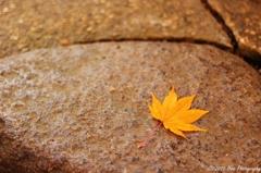小さな秋の物語を