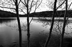 懐かしの昭和歌謡     湖愁