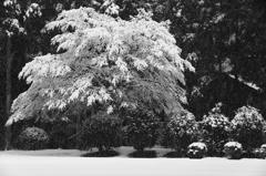 雪模様  三題     その・・白き重み