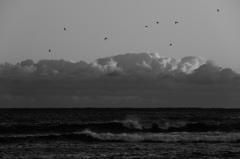 モノクロームの海   三題    海鳥