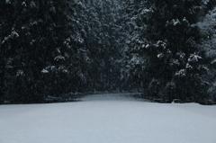 雪模様   三題     参道