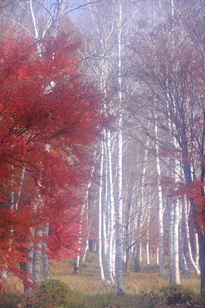 秋の白樺 三題 エピローグ 舞踏会