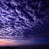 鳥羽の朝陽  三題 エピローグ  本降りの少し前・・