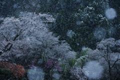 深々と 春色染める 雪の舞・・