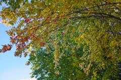 秋色を訪ねて.5