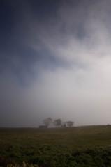 朝霧に霞む