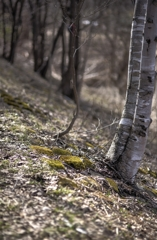 ゆっくりと氷点の林を歩く 5