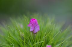 6月の庭から、ワイルドフラワー