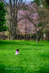 旭川市常磐公園、お花見