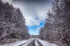 Starts of winter 1