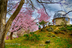 旭川市常磐公園、櫻花のある風景