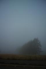 朝霧につつまれて