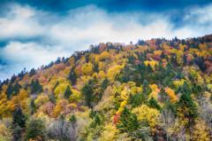 金山峠の秋色