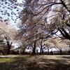 2019/04/06_氷川児童公園の桜
