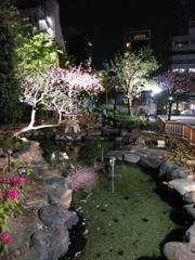2019/04/15_夜の御徒町公園