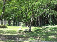 2018/09/14_水源地公園の標準木
