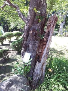 2018/09/14_水源地公園の桜(?)