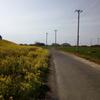 2019/04/07_荒川土手の菜の花