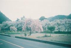 2019/04/07_外秩父の桜(没カット)