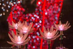 Flower Fantasy-3-