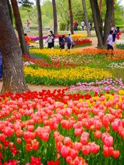 tulip river!