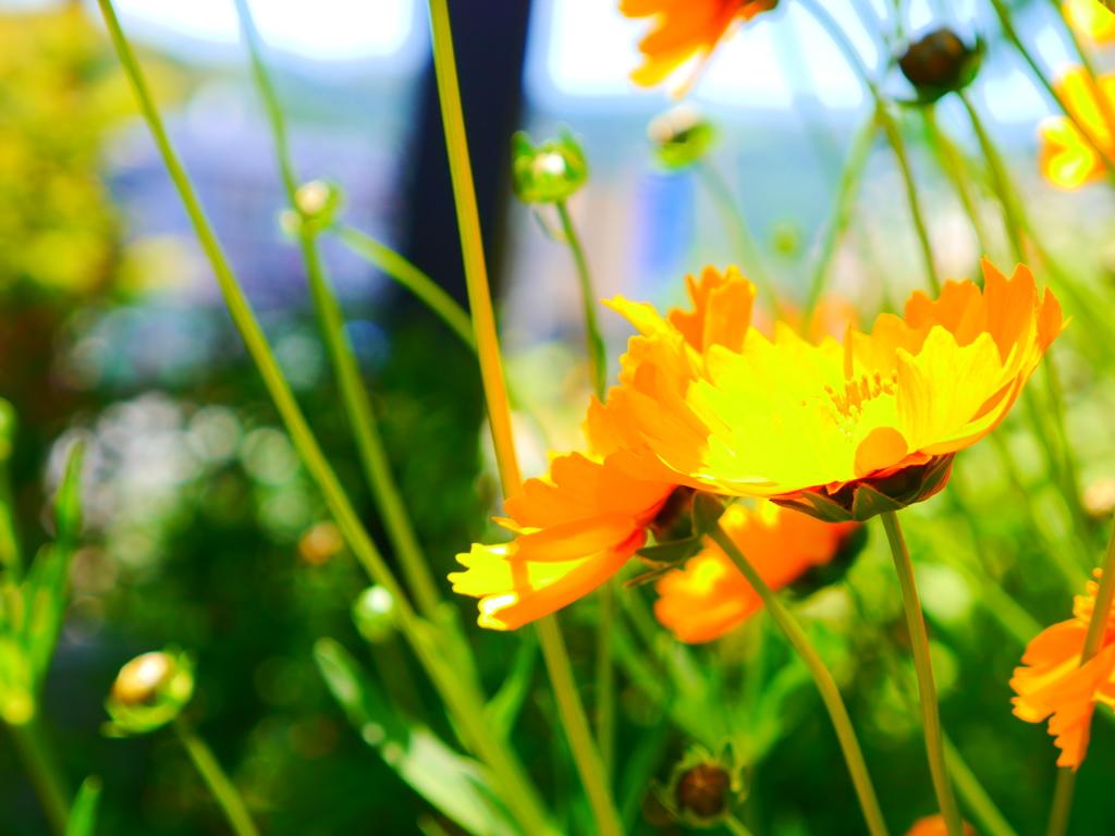 咲いて咲いて
