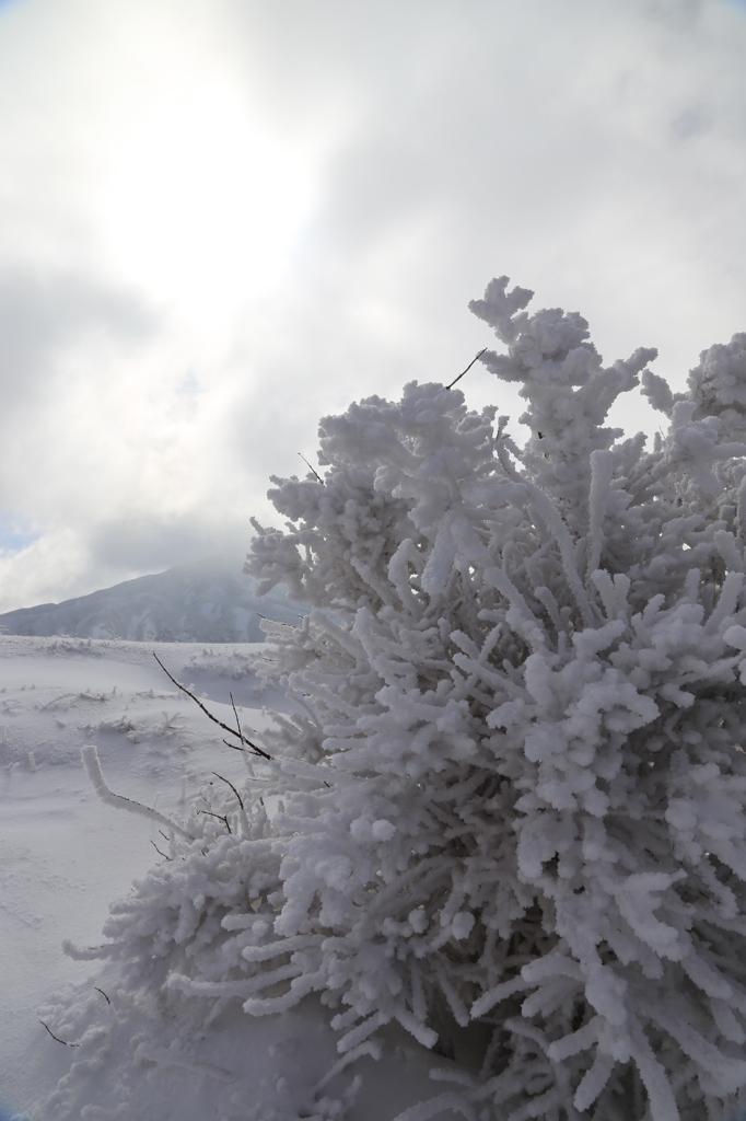 雪の阿蘇2