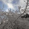 雪の阿蘇4