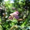 我が家の庭2020y-340