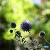 我が家の庭2020y-377