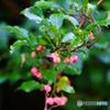 熊野川沿の秋の山野草-6