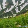 飯豊連峰に咲く山野草-8