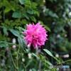 薔薇便り2021y-104