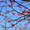 雁戸山に咲く山野草-3
