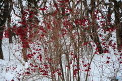 真冬の散策-1