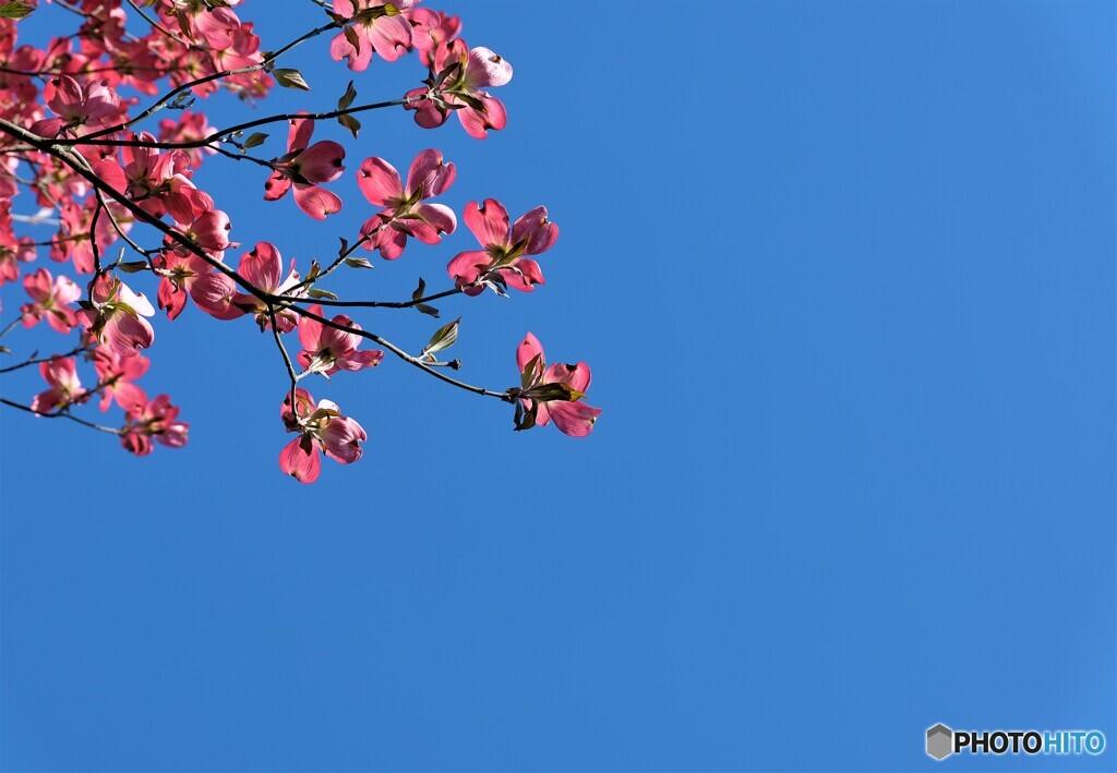 花水木便り2021y-6