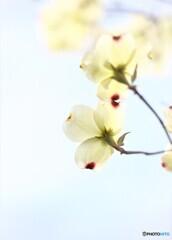花水木便り2021y-13
