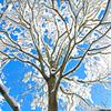 冬の青空-1