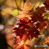 晩秋の散策-4