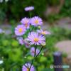 我が家の今週末の庭-1