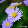 盛夏の庭-3