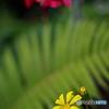 週末の庭-5