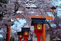 京都の桜と言えば平野神社