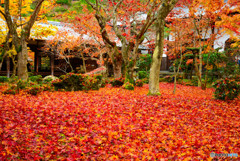 庭一面に広がる敷き紅葉