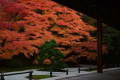 秋の彩り 南禅寺・天授庵