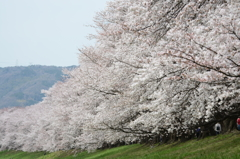咲きほこる2