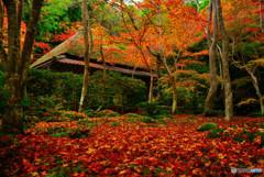 祇王寺の床紅葉