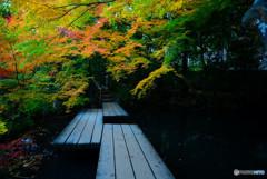 書院南庭・秋の彩り