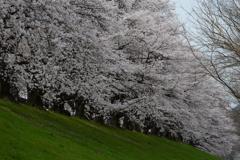 咲きほこる3